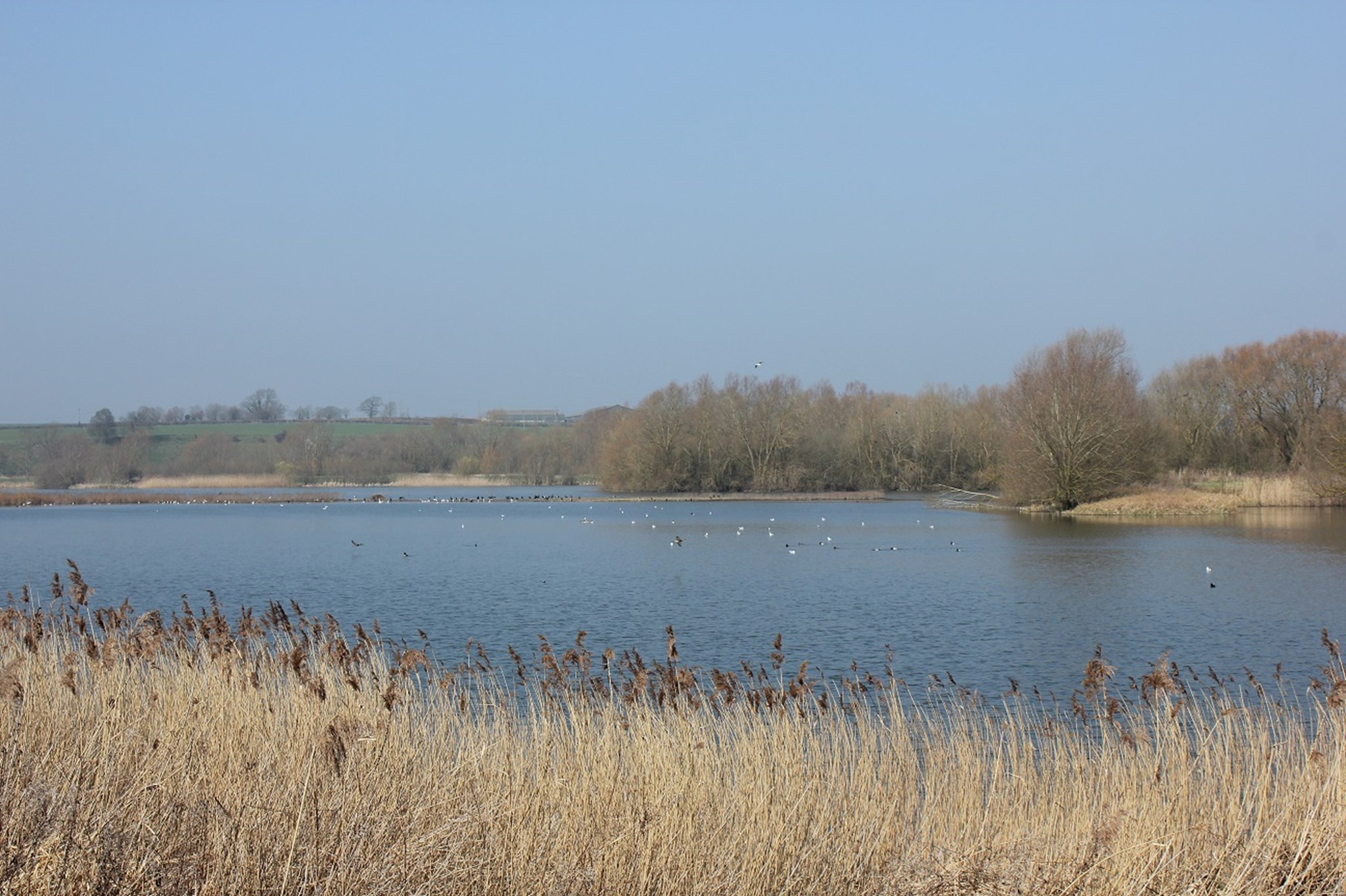 linford lakes nature reserve.jpg
