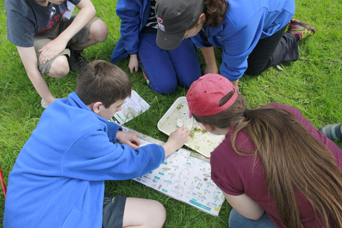 Young people undertaking a pond investigation