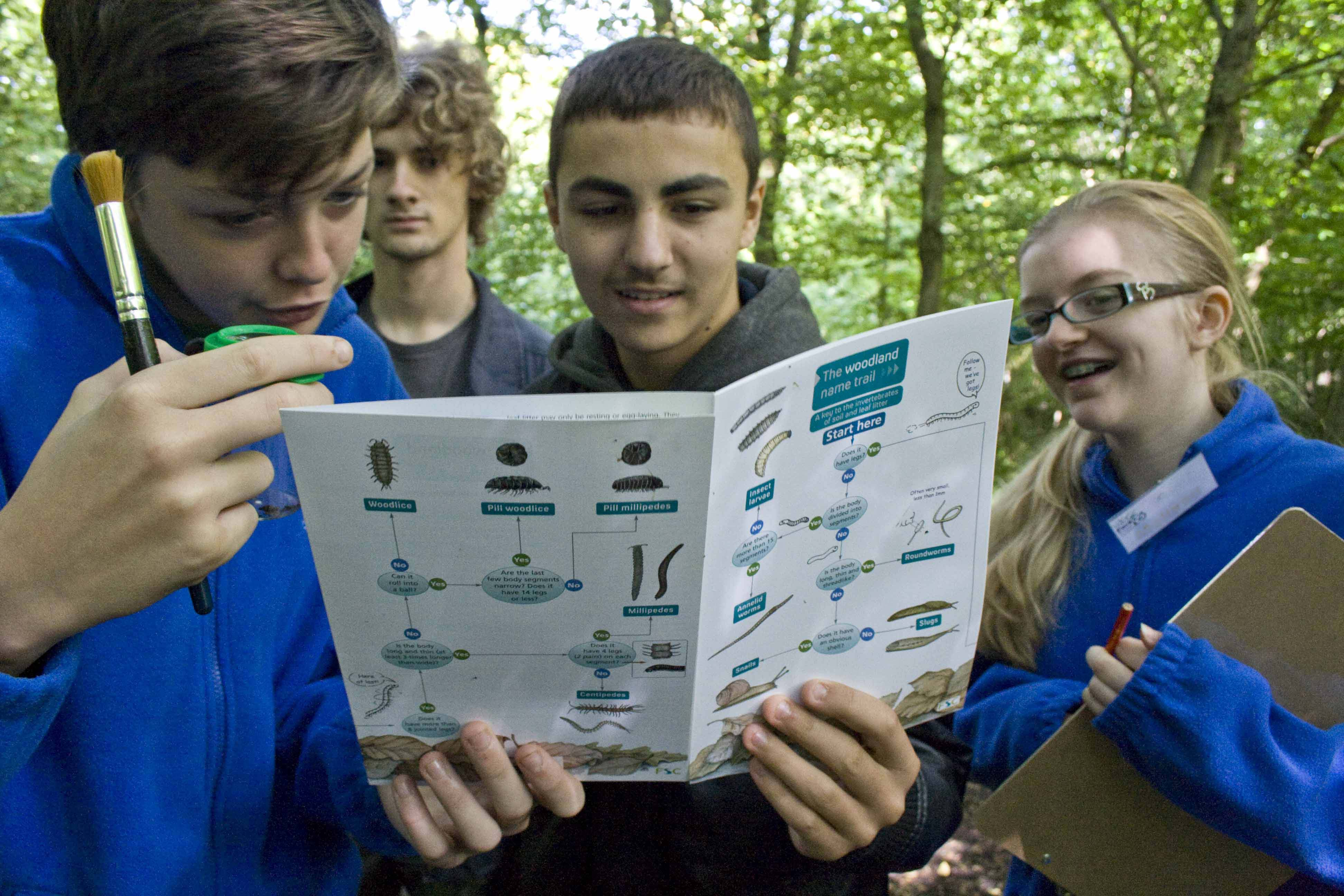 Young people investigating invertebrates in Howe Park Wood