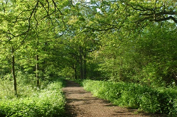Linford Wood park.jpg (1)