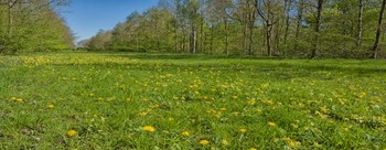 D81_3994Dandelion avenue Hazeley Wood park.jpg