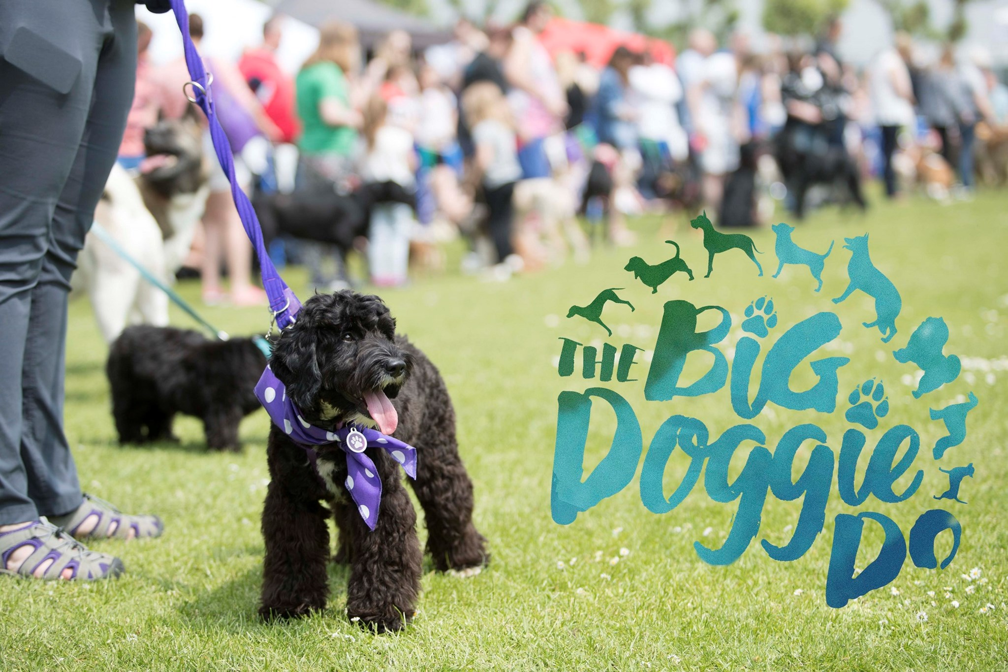 Big Doggie do banner for blog.jpg