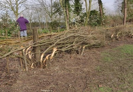 Hedgelaying_ Blog Listing Image (1).jpg